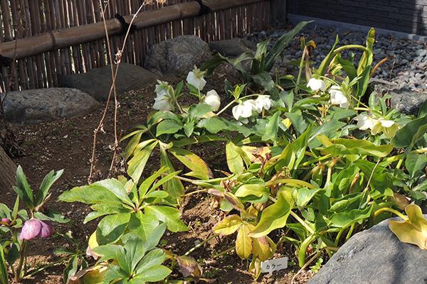 お寺の草花