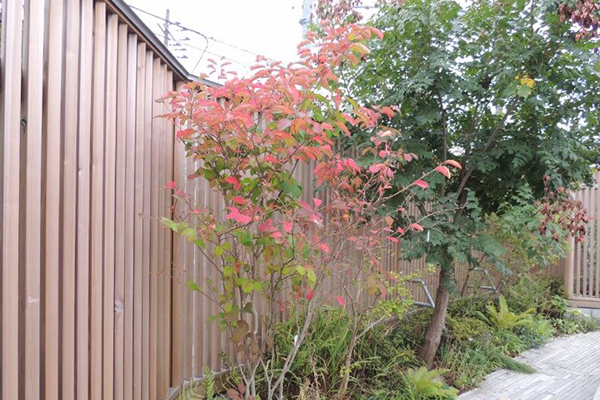 本光寺の草花